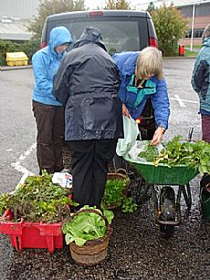 Sorting out produce at Fortrose - Click for larger version